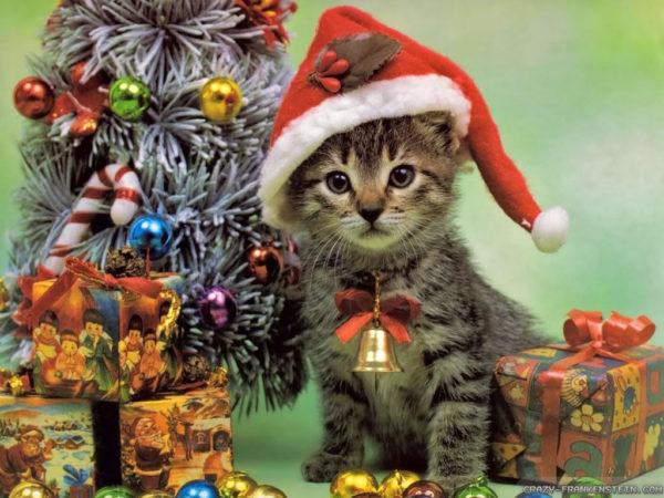 Soirée du Chat : Vendredi 20 décembre
